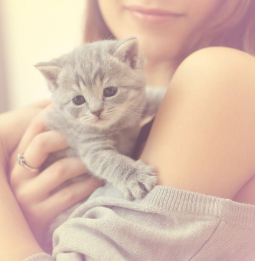 Awesome Baby Images: Awesome, Awn, Baby, Cat, Cute