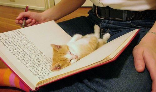 aww, book, cute, kitten, pen