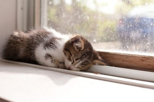 aww, cat, cat nap, cute, kitten, photography, resting, sleeping, window
