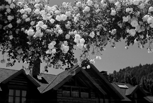 b&w, beautiful, black & white, black and white, cute, flower, flowers, house, landscape, nature, photo, photography, place, sky