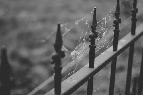 b&w, black and white, goth, spider, spider web