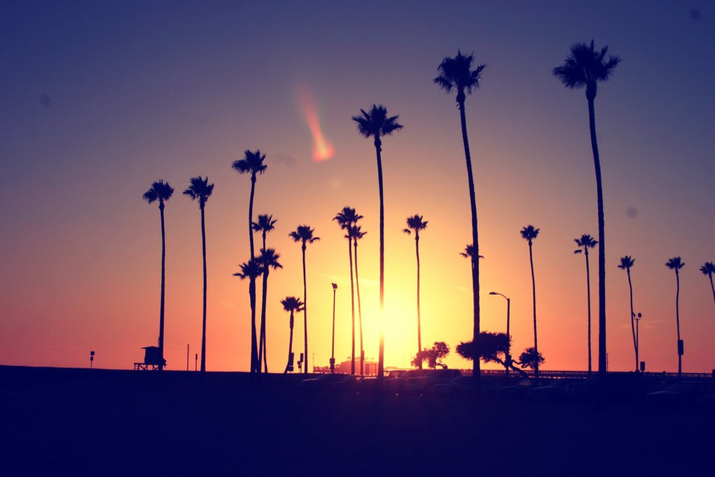 beach, california, palm, photography, sky