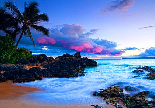 beach, palm trees, sea, sky, summer