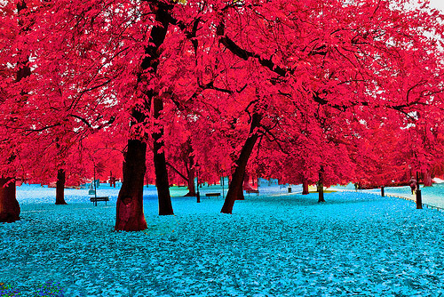beautiful, blue, nature, park, photo, photography, pink, pretty, red