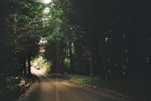 beautiful, car, forest, nature, people