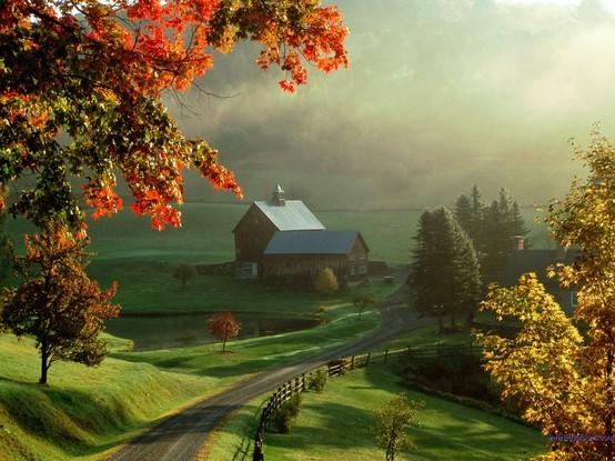 beautiful, country, farm, morning, road