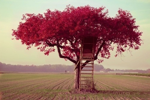 beautiful, cute, dream, red, tree
