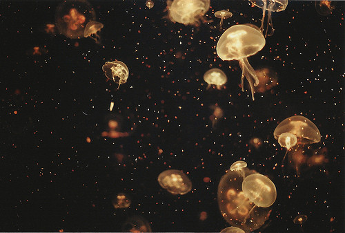 beautiful, indie, jelly fish, lights, nature