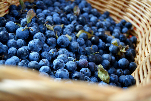 berries, blue, blueberries, food, fruit