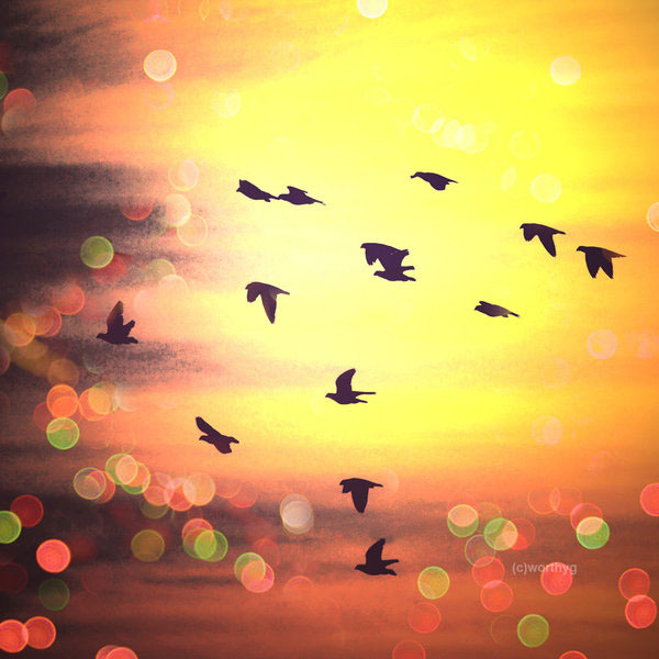 birds, bokeh, bright, flight, lights