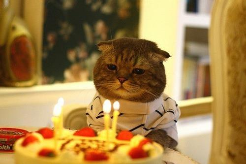 birthday, cake, cat, fat cat
