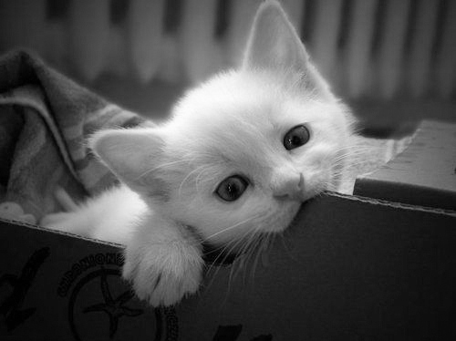 black & white, cat, cute, kitten, kitty