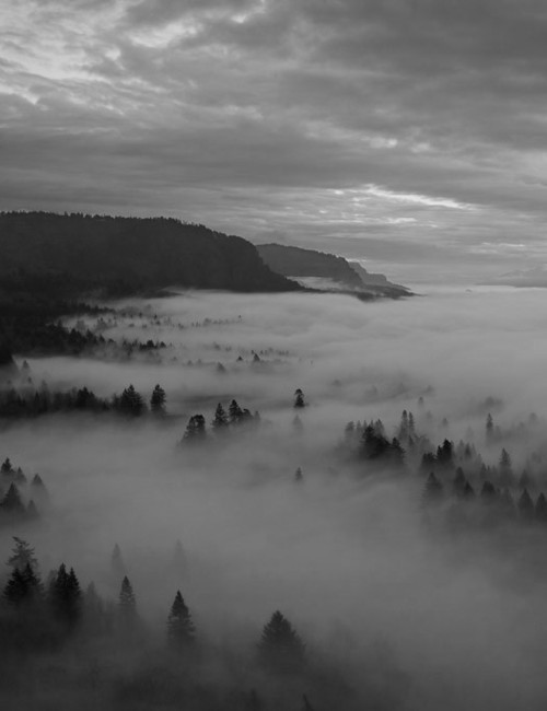 black and white, clouds, fog, forest, landscape