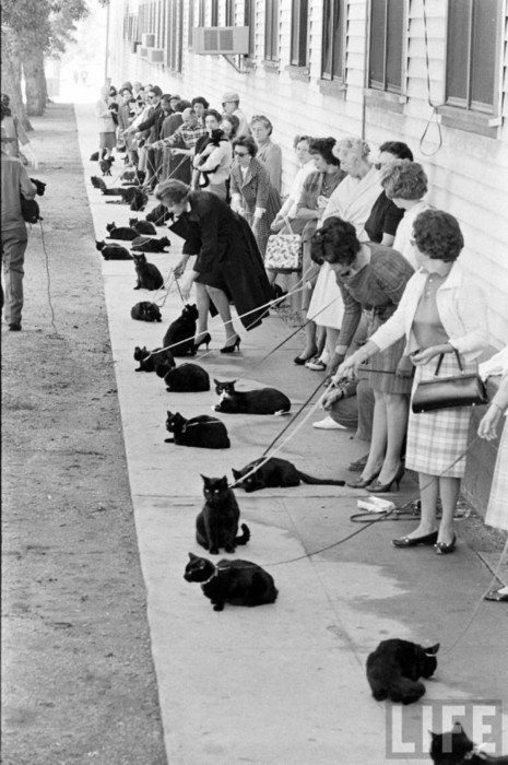 black, black cats, cats, epic, ladies