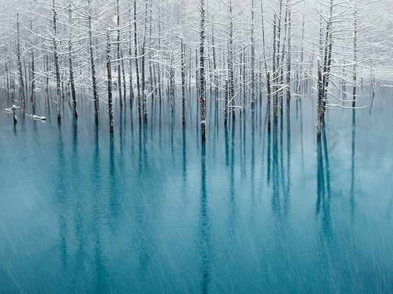 blue, blue pond, forest, frost, hokkaido, ice, japan, landscape, pond, scenery, snow, trees, white, winter