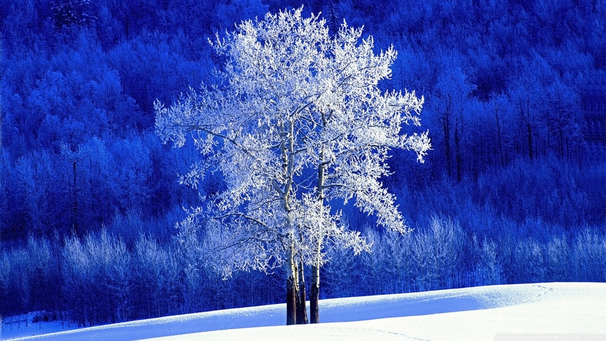 blue, nature, snow, tree