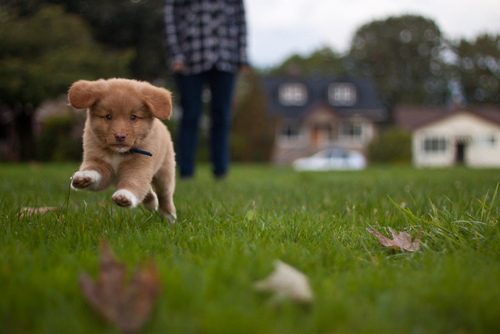boy, cute, dog, grass, house, nature, photography, puppy
