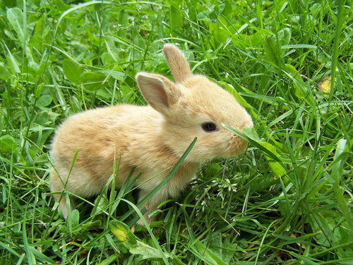 bunny, cute, rabbit