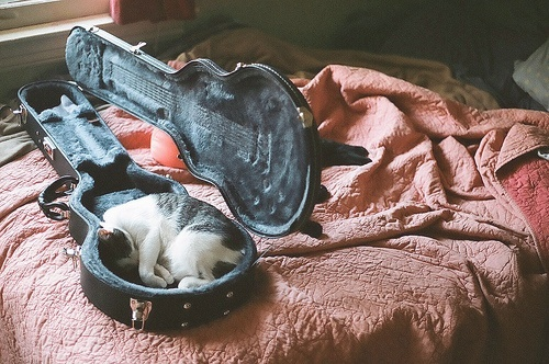 case, guitar, pink, savannah, sleep, sleeping, sun
