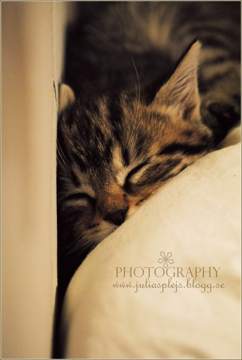 cat, cute, dream, kitten, photography