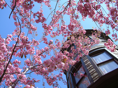 colors, cute, japan, nature, sakura, tree, trees