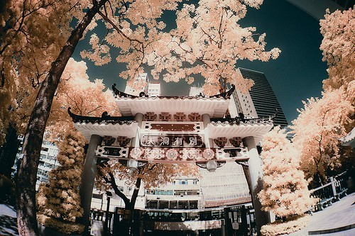 colors, cute, japan, nature, tree