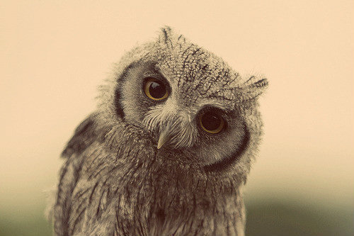 cute, design, fashion, fashion week, girl, owl, photography, style, vintage