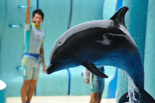 cute, disney, dolphin, photography