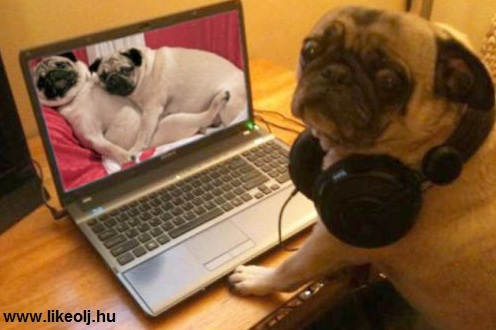 cute, dog, dogs, funny, haha, laptop, lol, m & e, porn, pug