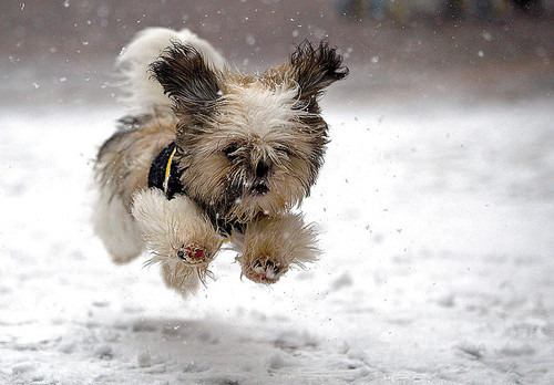 cute, dog, snow, winter