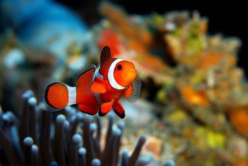 Cute Fish Sea Image 409871 On