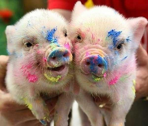 cute, flowers, pig, piggy, pigs