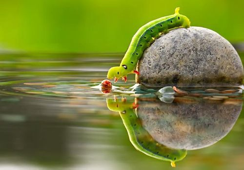 cute, green, nature, stone, water