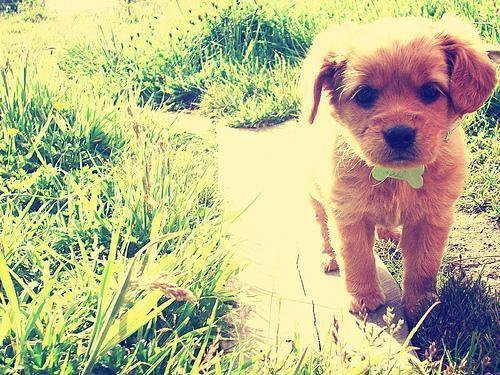 cute, photography, puppy
