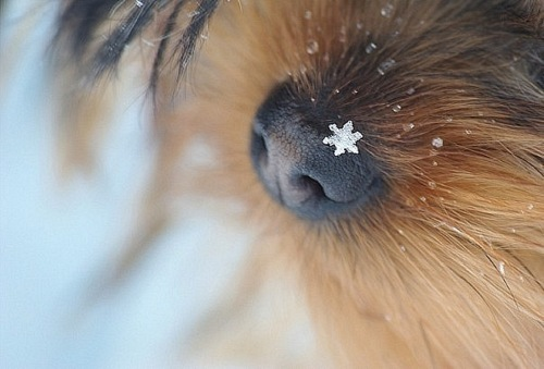cute, puppy, snowflack