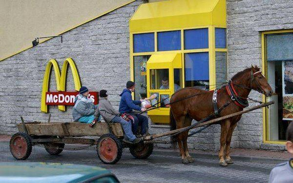drive thru, fast food, funny, horse, mcdonalds