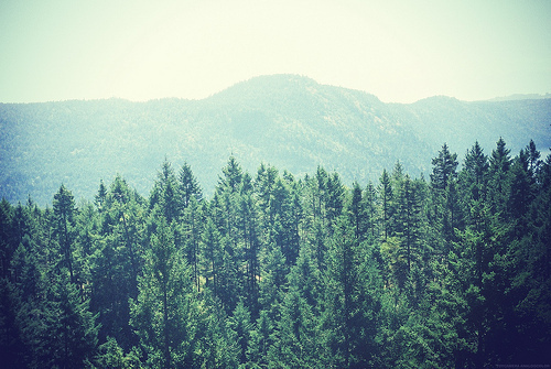 film, forest, grain, indie, landscape