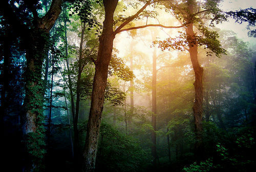 forest, light, nature, sun, sunlight, trees, woods