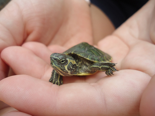 hand, photography, turtle