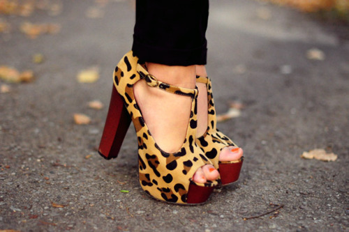 adorable, amazing, animal print, awesome, beautiful