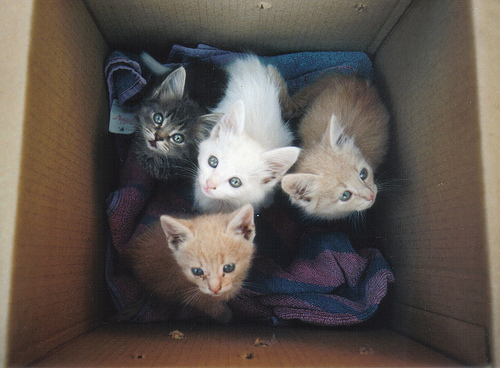 adorable, animals, box, cat, cats