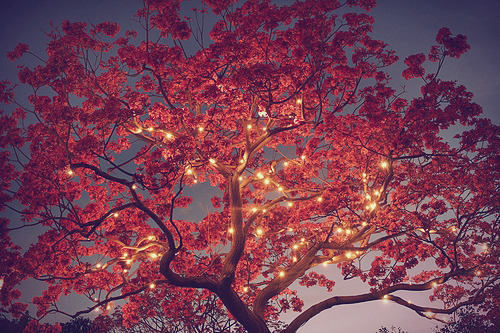 adorable, awesome, beautiful, lights, nice, red, tree