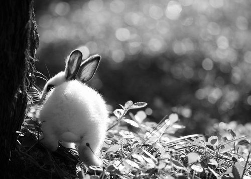 adorable, awesome, bunny, rabbit, small, white