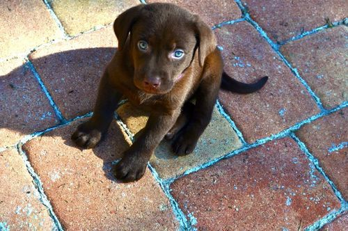 adorable, aww, blue eyes, brown, cute