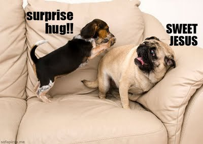 adorable, beagle, hug, jesus, lol, pug, puppy
