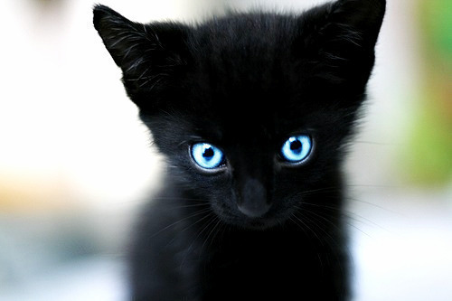 adorable, black cat, blue eyes, cat, cute, pretty, sweet