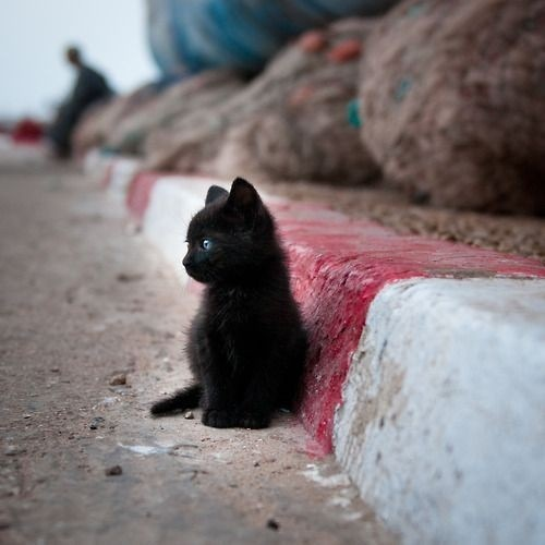 adorable, black, cat, cute, kitten