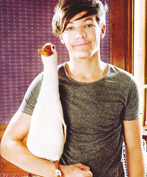 adorable, boy, british, cute, duck