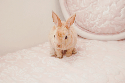 adorable, cute, lovely, pastel, pink, rabbit, vintage