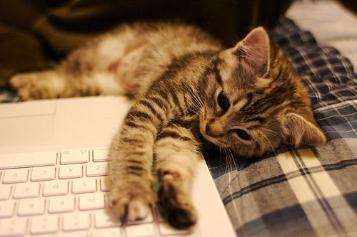 adorble, asleep, cat, cute, love, photography